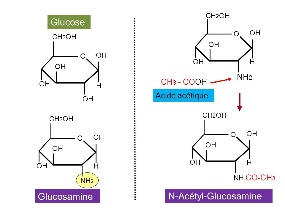 OH CH 2 OH O OH H Glucose Acide acétique NH 2 CH 2 OH O OH H Glucosamine NH - CO-CH 3 CH 2 OH O OH H NH 2 CH 2 OH O OH H CH 3 - COOH N-Acétyl-Glucosam