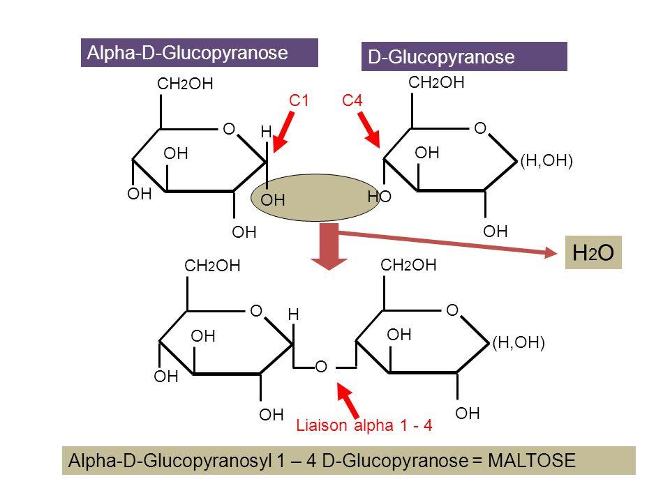 OH CH 2 OH O OH H CH 2 OH O OH (H,OH) Alpha-D-Glucopyranose D-Glucopyranose Alpha-D-Glucopyranosyl 1 – 6 D-Glucopyranose C1 C6 OH CH 2 OH O OH H CH 2 O OH (H,OH) O OH Liaison alpha 1 - 6 H2OH2O