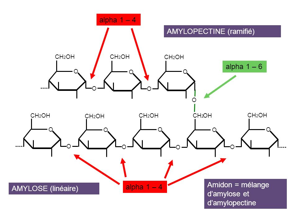 Liaisons alpha 1- 4 Liaisons alpha 1- 6 AMYLOPECTINE ou GLYCOGENE