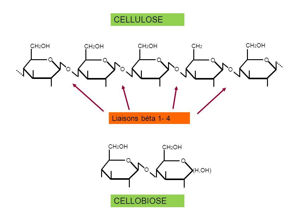 Maltose Maltotriose Dextrines Amylases (liaisons alpha 1-4) glandes salivaires, pancréas alpha 1–6 glucosidase Maltase Glucose DIGESTION DE LAMIDON DANS LE TUBE DIGESTIF