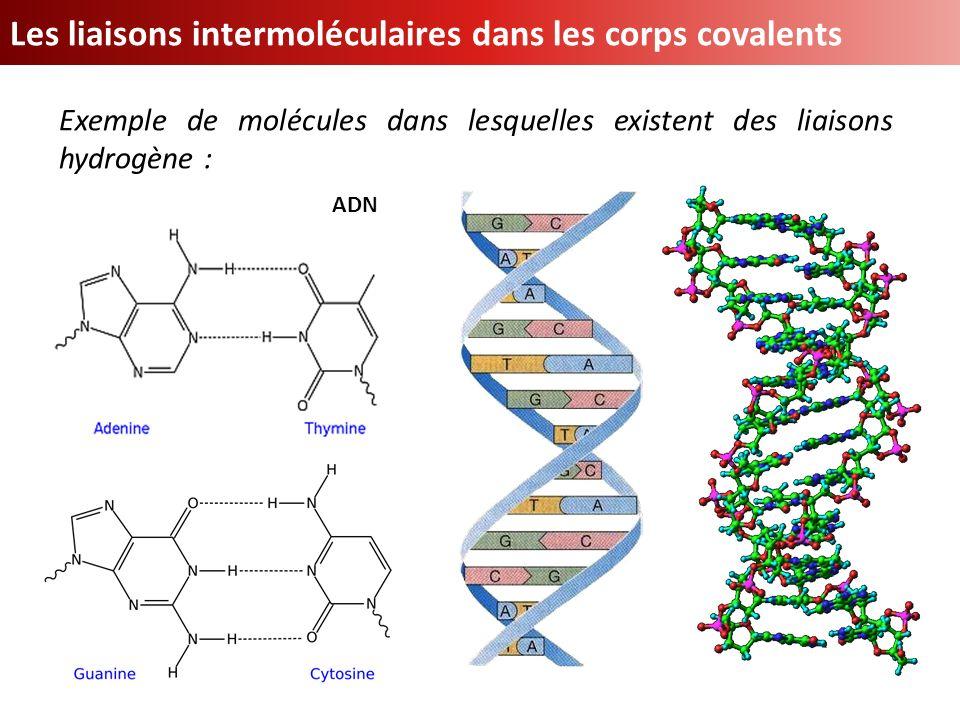 Les liaisons intermoléculaires dans les corps covalents Exemple de molécules dans lesquelles existent des liaisons hydrogène : ADN