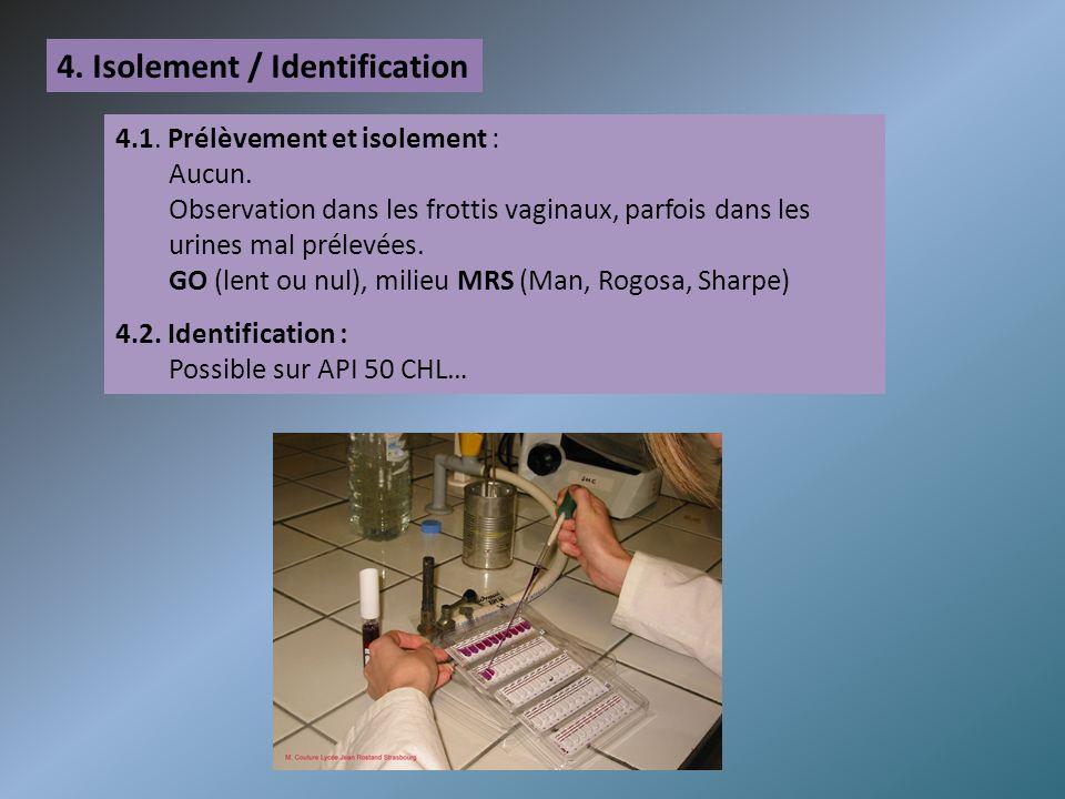 4.Isolement / Identification 4.1. Prélèvement et isolement : Aucun.