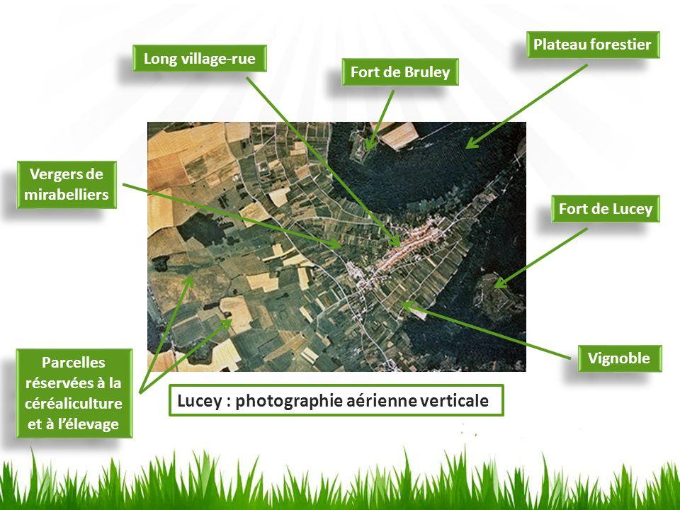 Plateau forestier Fort de Bruley Fort de Lucey Long village-rue Vignoble Parcelles réservées à la céréaliculture et à lélevage Vergers de mirabelliers