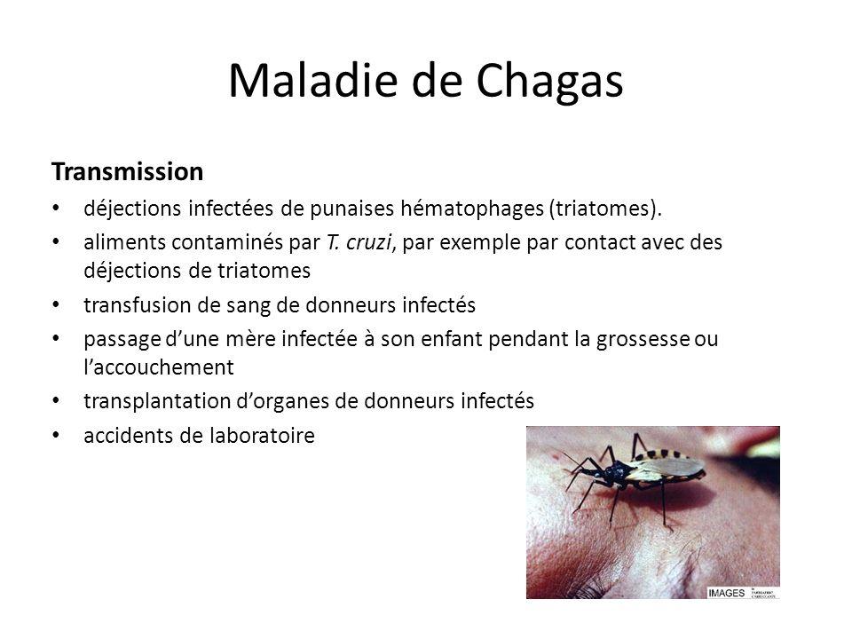 Maladie de Chagas Transmission