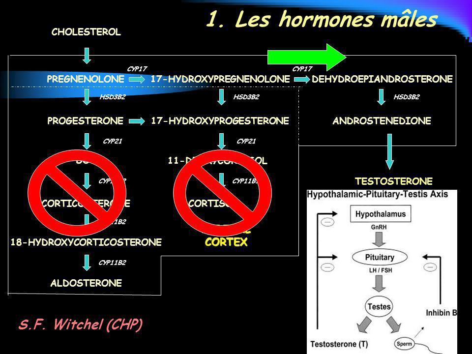 CHOLESTEROL PREGNENOLONE PROGESTERONE DOC CORTICOSTERONE 18-HYDROXYCORTICOSTERONE ALDOSTERONE 17-HYDROXYPREGNENOLONE 17-HYDROXYPROGESTERONE 11-DEOXYCO