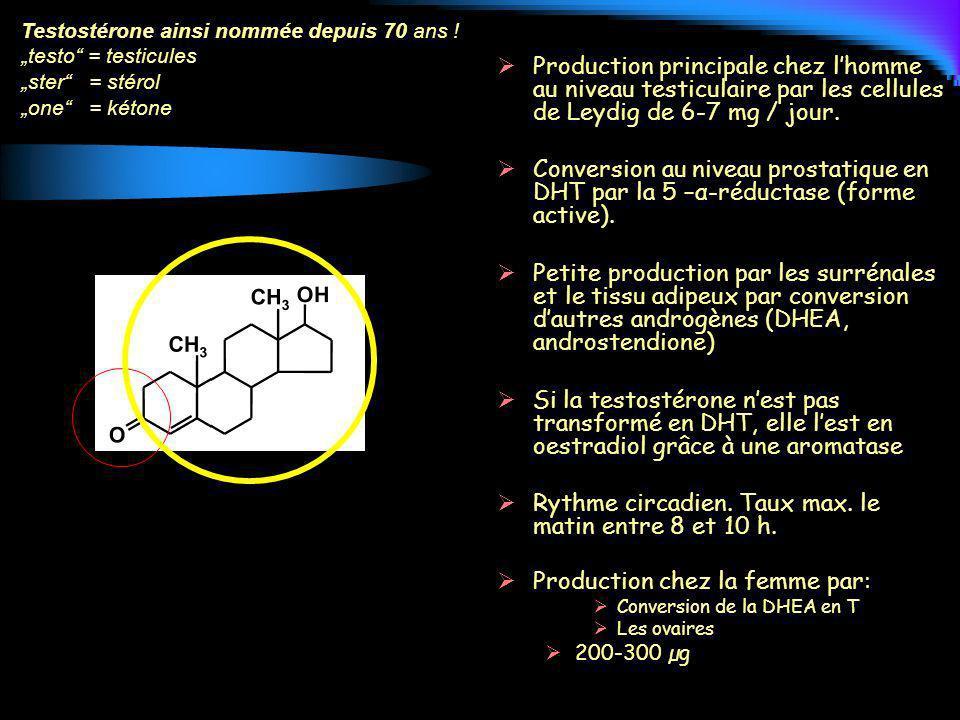 Production principale chez lhomme au niveau testiculaire par les cellules de Leydig de 6-7 mg / jour. Conversion au niveau prostatique en DHT par la 5