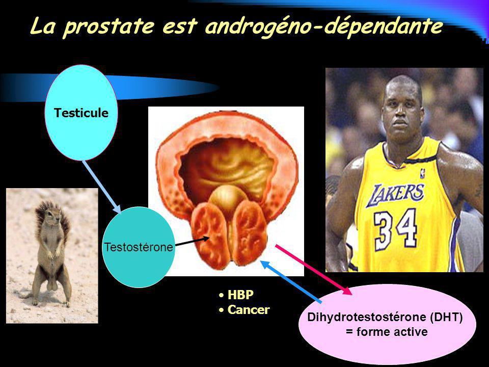 Testostérone Dihydrotestostérone (DHT) = forme active Testicule HBP Cancer La prostate est androgéno-dépendante