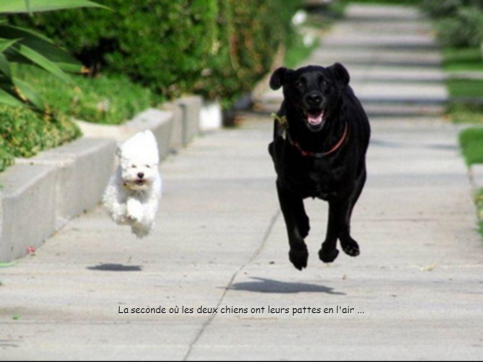 La seconde où les deux chiens ont leurs pattes en l air...