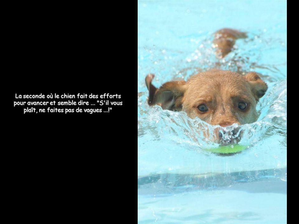 La seconde où le chien fait des efforts pour avancer et semble dire...