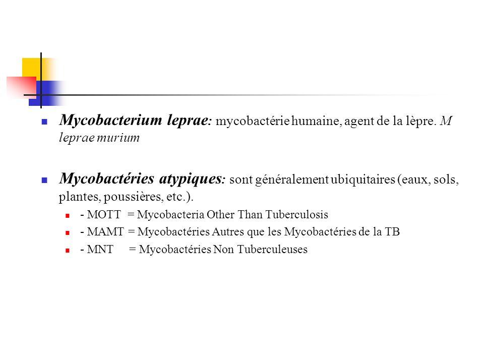 Mycobacterium leprae : mycobactérie humaine, agent de la lèpre. M leprae murium Mycobactéries atypiques : sont généralement ubiquitaires (eaux, sols,