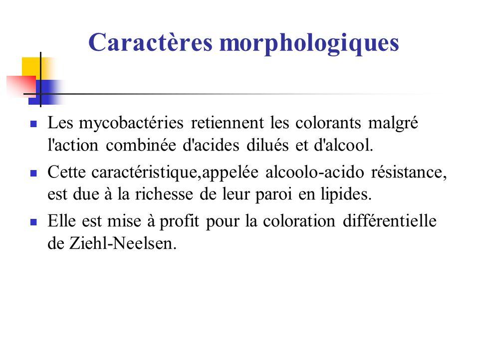 Caractères morphologiques Les mycobactéries retiennent les colorants malgré l'action combinée d'acides dilués et d'alcool. Cette caractéristique,appel