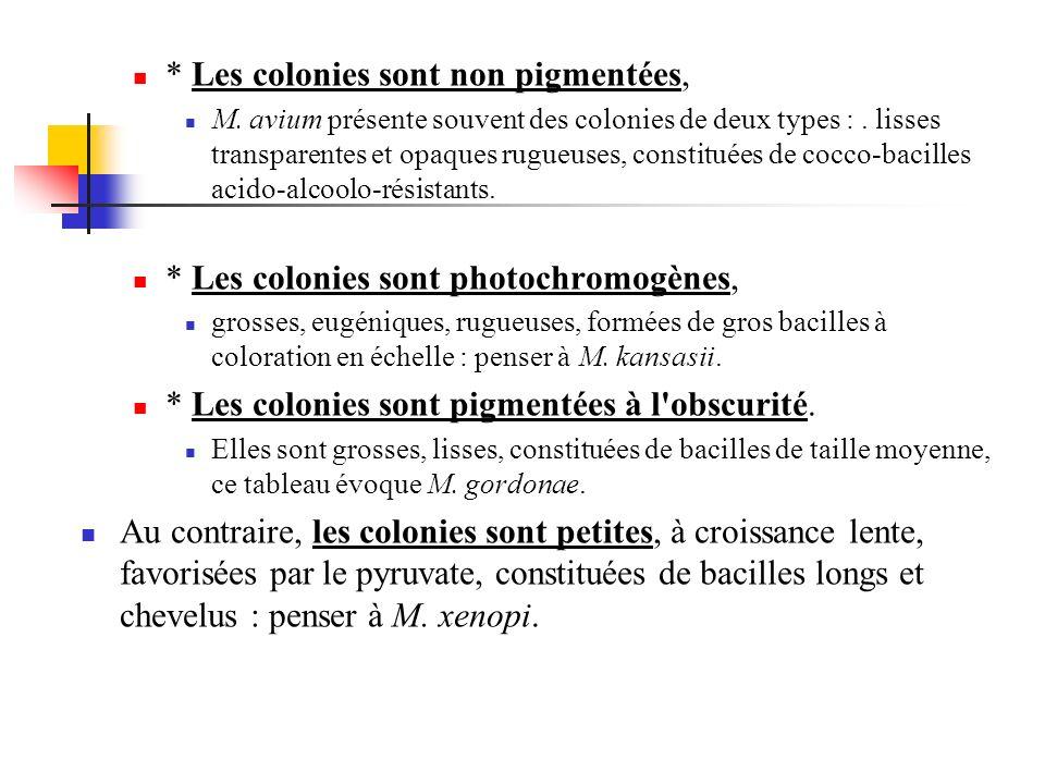 * Les colonies sont non pigmentées, M. avium présente souvent des colonies de deux types :. lisses transparentes et opaques rugueuses, constituées de