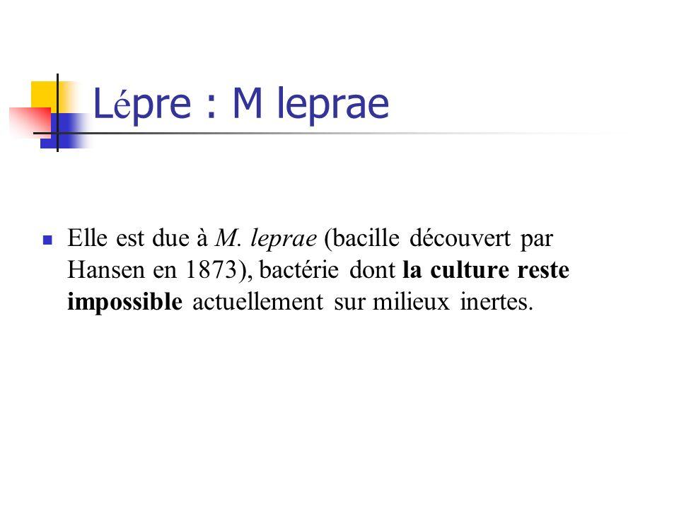 L é pre : M leprae Elle est due à M. leprae (bacille découvert par Hansen en 1873), bactérie dont la culture reste impossible actuellement sur milieux