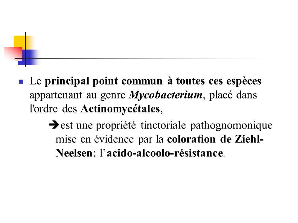Le principal point commun à toutes ces espèces appartenant au genre Mycobacterium, placé dans l'ordre des Actinomycétales, est une propriété tinctoria