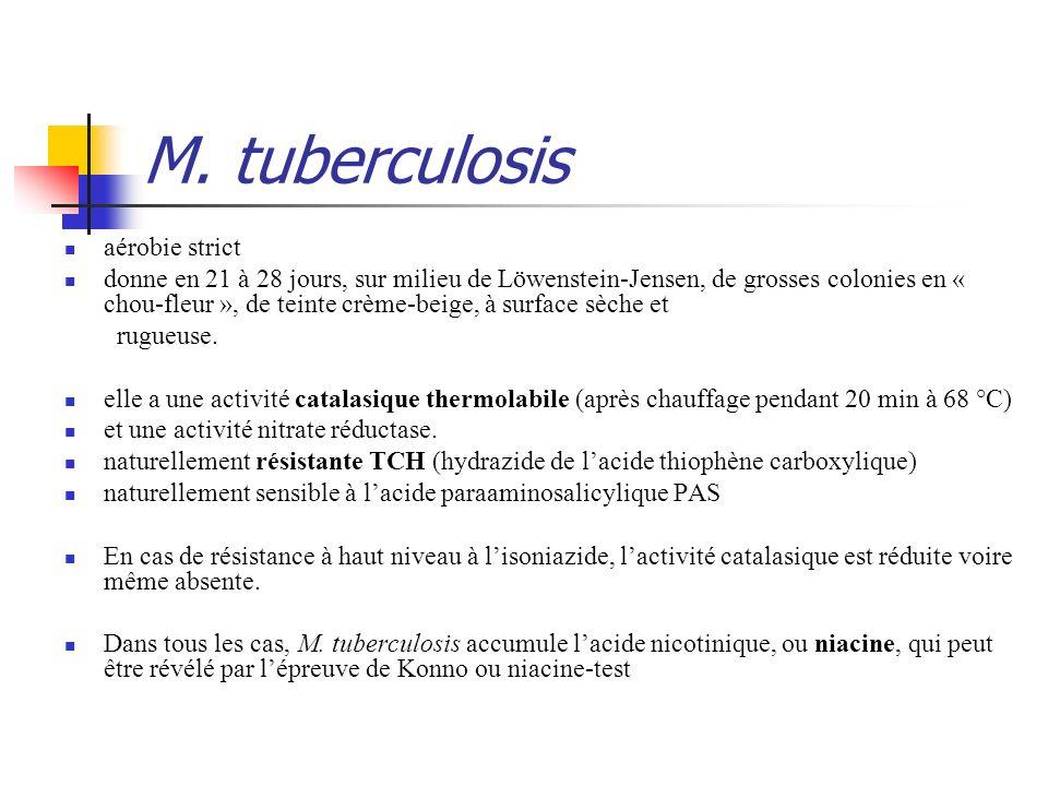 M. tuberculosis aérobie strict donne en 21 à 28 jours, sur milieu de Löwenstein-Jensen, de grosses colonies en « chou-fleur », de teinte crème-beige,