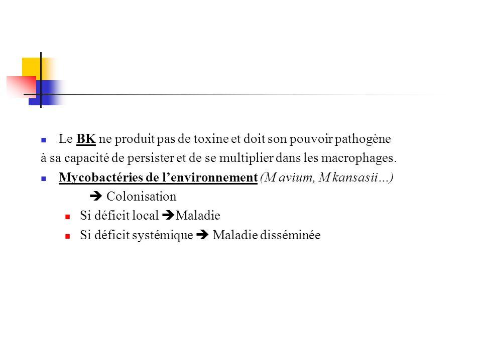 Le BK ne produit pas de toxine et doit son pouvoir pathogène à sa capacité de persister et de se multiplier dans les macrophages. Mycobactéries de len