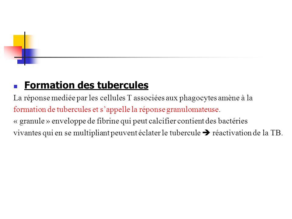 Formation des tubercules La réponse mediée par les cellules T associées aux phagocytes amène à la formation de tubercules et sappelle la réponse granu