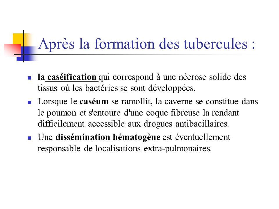 Après la formation des tubercules : la caséification qui correspond à une nécrose solide des tissus où les bactéries se sont développées. Lorsque le c