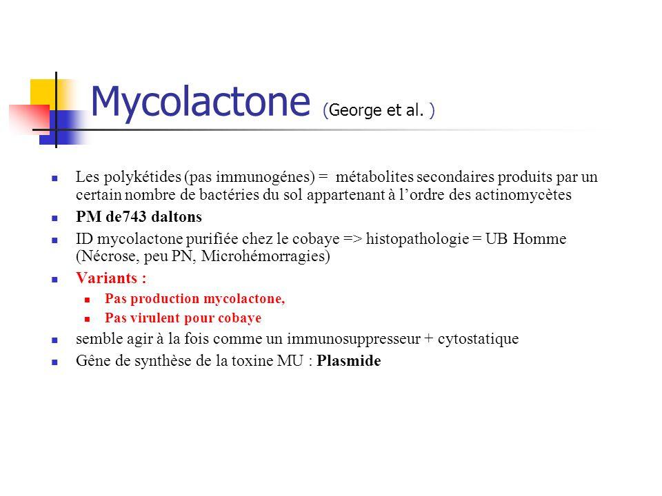 Mycolactone (George et al. ) Les polykétides (pas immunogénes) = métabolites secondaires produits par un certain nombre de bactéries du sol appartenan