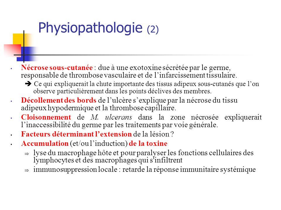 Physiopathologie (2) Nécrose sous-cutanée : due à une exotoxine sécrétée par le germe, responsable de thrombose vasculaire et de linfarcissement tissu