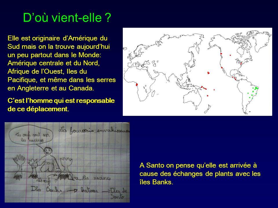 Elle est originaire dAmérique du Sud mais on la trouve aujourdhui un peu partout dans le Monde: Amérique centrale et du Nord, Afrique de lOuest, Iles