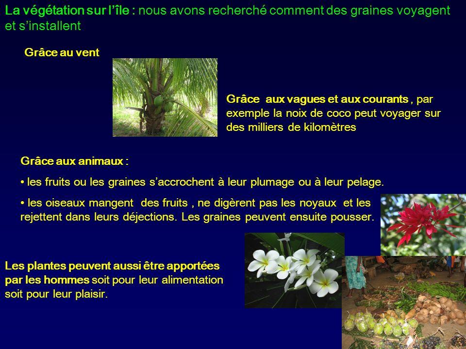 La végétation sur lîle : nous avons recherché comment des graines voyagent et sinstallent Grâce au vent Les plantes peuvent aussi être apportées par l