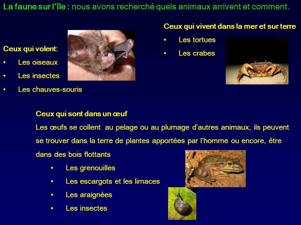 La faune sur lîle : nous avons recherché quels animaux arrivent et comment. Ceux qui vivent dans la mer et sur terre Les tortues Les crabes Ceux qui v