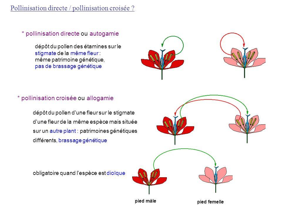 * pollinisation directe ou autogamie dépôt du pollen des étamines sur le stigmate de la même fleur : même patrimoine génétique, pas de brassage généti