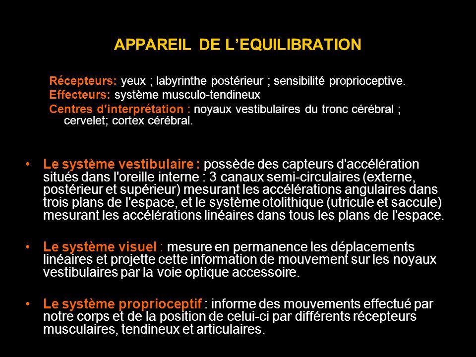 APPAREIL DE LEQUILIBRATION Récepteurs: yeux ; labyrinthe postérieur ; sensibilité proprioceptive. Effecteurs: système musculo-tendineux Centres d'inte
