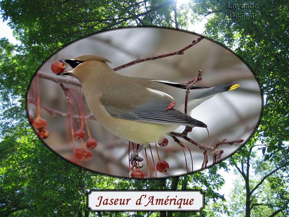 La façon la plus simple de nourrir les oiseaux consiste à lancer de la nourriture par terre.