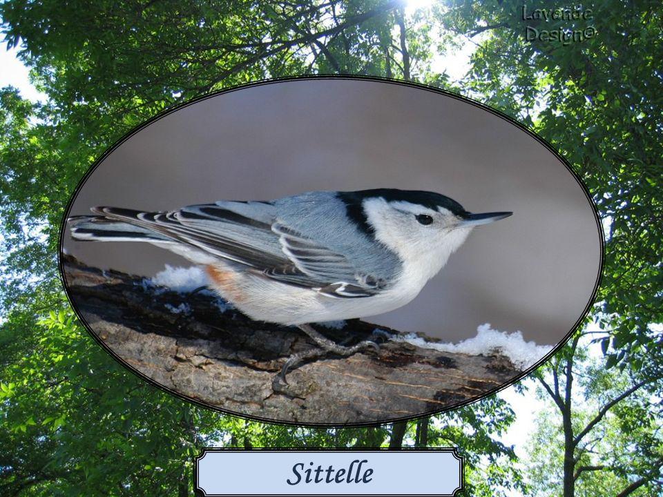 Les oiseaux trouvent facilement les sources d alimentation, surtout si elles sont fiables et à l abri des prédateurs.