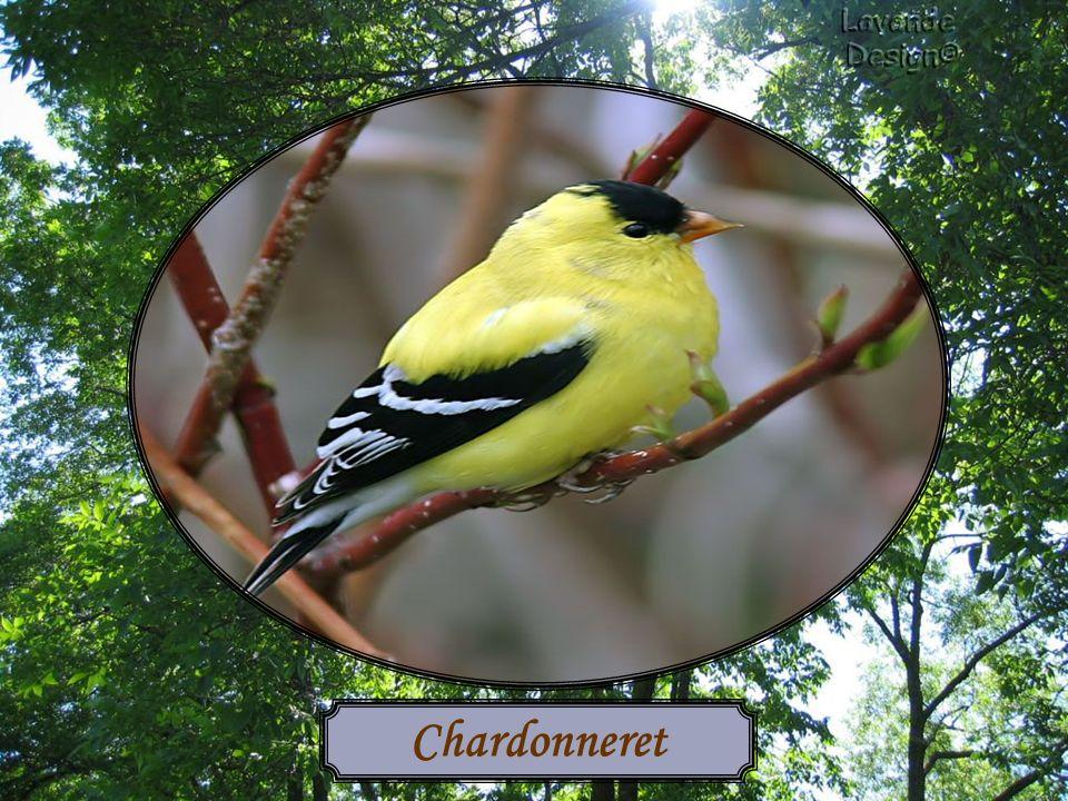 Les oiseaux ont besoin deau pour survivre, surtout durant les canicules de lété ou les grands froids de lhiver.