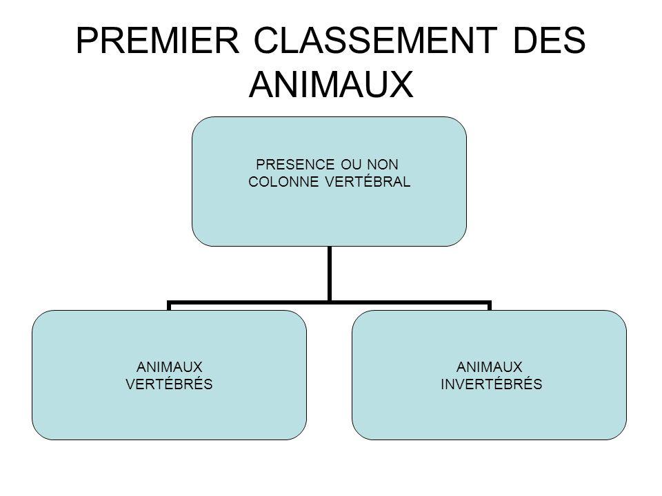 PREMIER CLASSEMENT DES ANIMAUX PRESENCE OU NON COLONNE VERTÉBRAL ANIMAUX VERTÉBRÉS ANIMAUX INVERTÉBRÉS