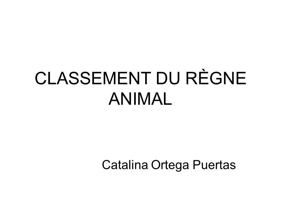 CLASSEMENT DU RÈGNE ANIMAL Catalina Ortega Puertas