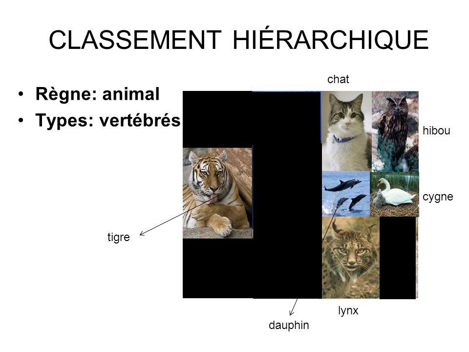 CLASSEMENT HIÉRARCHIQUE Règne: animal Types: vertébrés lynx dauphin tigre chat hibou cygne