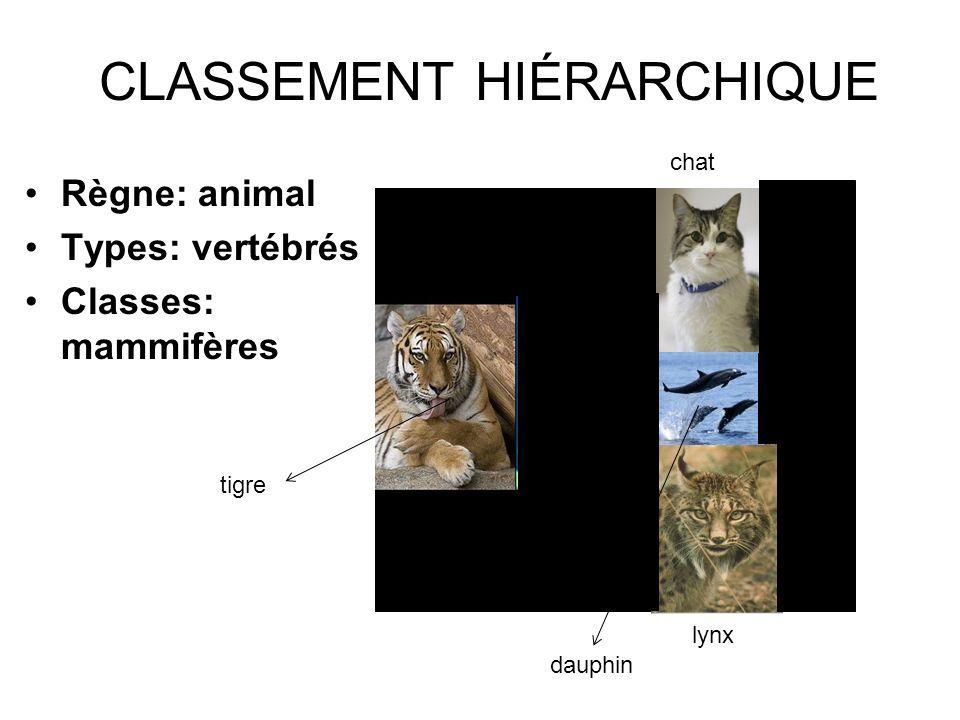 CLASSEMENT HIÉRARCHIQUE Règne: animal Types: vertébrés Classes: mammifères lynx dauphin tigre chat