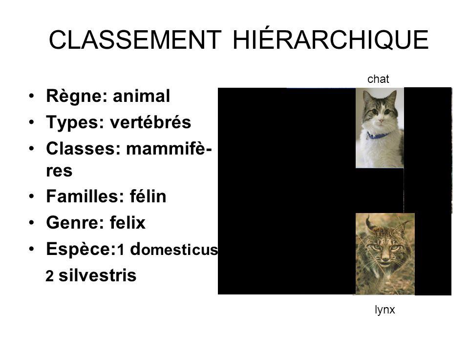 CLASSEMENT HIÉRARCHIQUE Règne: animal Types: vertébrés Classes: mammifè- res Familles: félin Genre: felix Espèce: 1 d omesticus 2 silvestris lynx chat