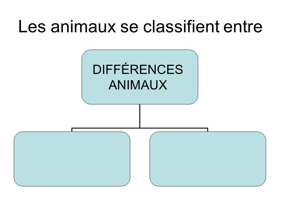 Les animaux se classifient entre DIFFÉRENCES ANIMAUX