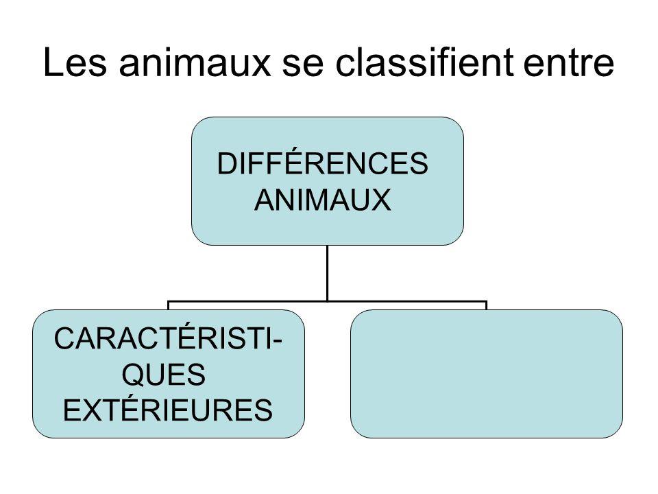 Les animaux se classifient entre DIFFÉRENCES ANIMAUX CARACTÉRISTI- QUES EXTÉRIEURES