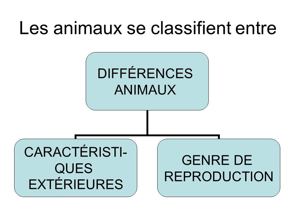 Les animaux se classifient entre DIFFÉRENCES ANIMAUX CARACTÉRISTI- QUES EXTÉRIEURES GENRE DE REPRODUCTION