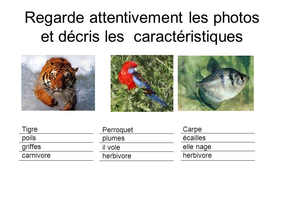 Regarde attentivement les photos et décris les caractéristiques Tigre poils griffes carnivore Perroquet plumes il vole herbivore Carpe écailles elle n