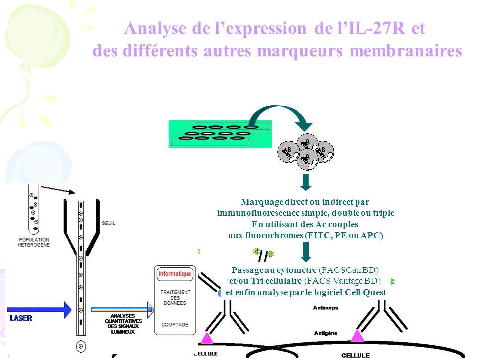 Analyse de lexpression de lIL-27R et des différents autres marqueurs membranaires Marquage direct ou indirect par immunofluorescence simple, double ou triple En utilisant des Ac couplés aux fluorochromes (FITC, PE ou APC) Passage au cytomètre (FACSCan BD) et/ou Tri cellulaire (FACS Vantage BD) et enfin analyse par le logiciel Cell Quest