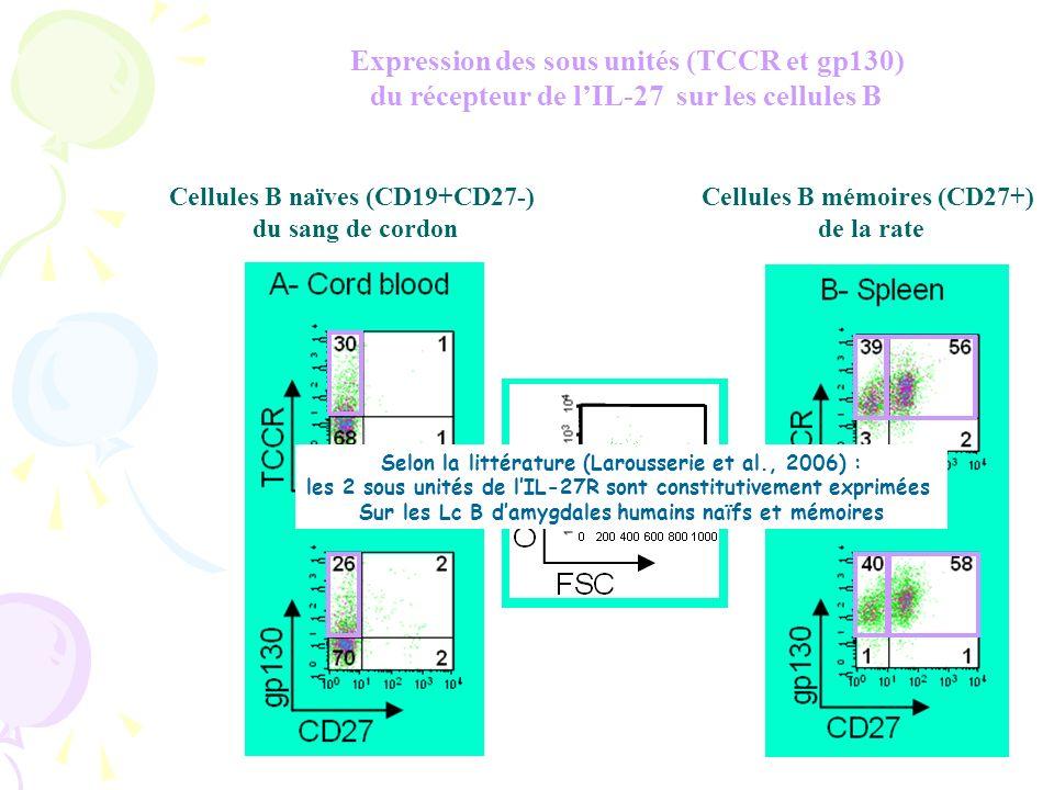 Expression des sous unités (TCCR et gp130) du récepteur de lIL-27 sur les cellules B Cellules B naïves (CD19+CD27-) du sang de cordon Cellules B naïves (CD27-) de la rate Cellules B mémoires (CD27+) de la rate Selon la littérature (Larousserie et al., 2006) : les 2 sous unités de lIL-27R sont constitutivement exprimées Sur les Lc B damygdales humains naïfs et mémoires