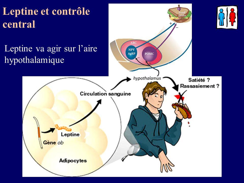 Leptine et contrôle central Leptine va agir sur laire hypothalamique