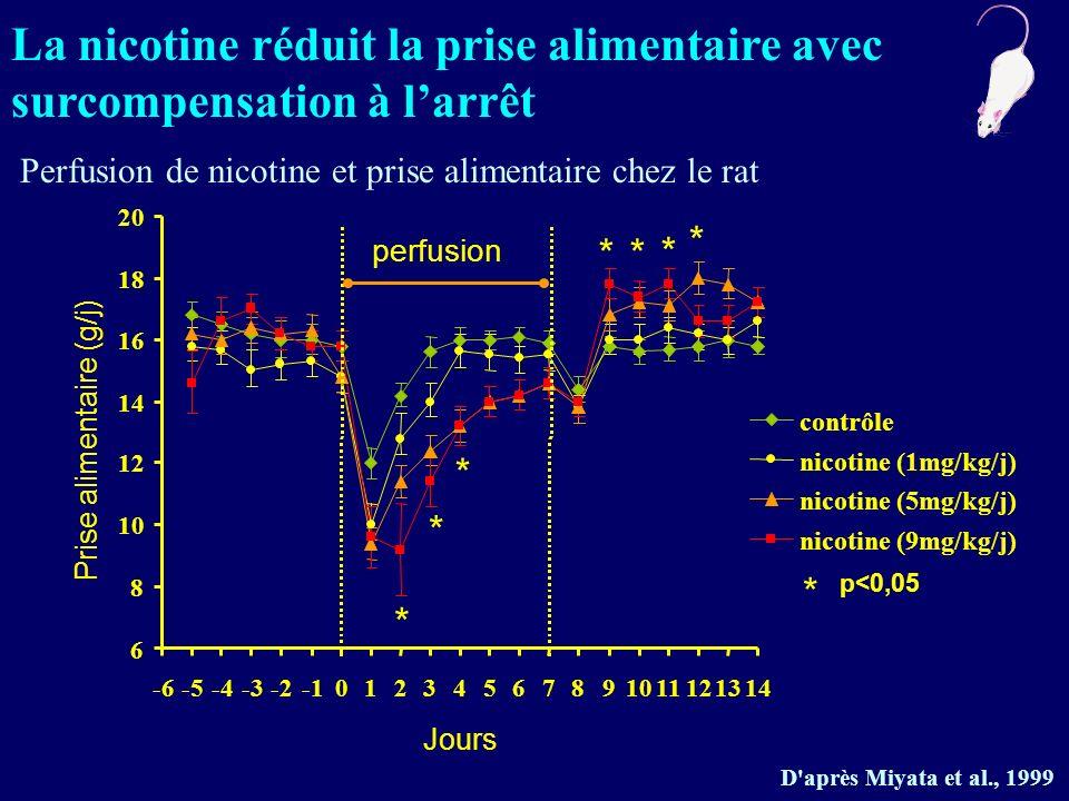 La nicotine réduit la prise alimentaire avec surcompensation à larrêt Perfusion de nicotine et prise alimentaire chez le rat D'après Miyata et al., 19