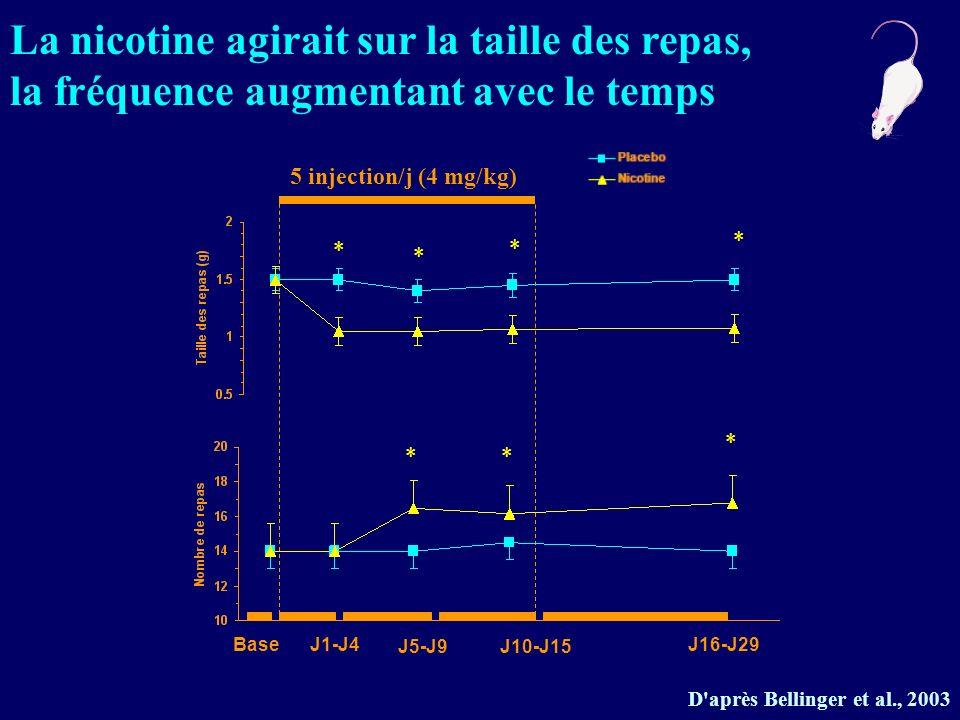 D'après Bellinger et al., 2003 5 injection/j (4 mg/kg) BaseJ1-J4 J5-J9J10-J15 J16-J29 * * * * ** * La nicotine agirait sur la taille des repas, la fré