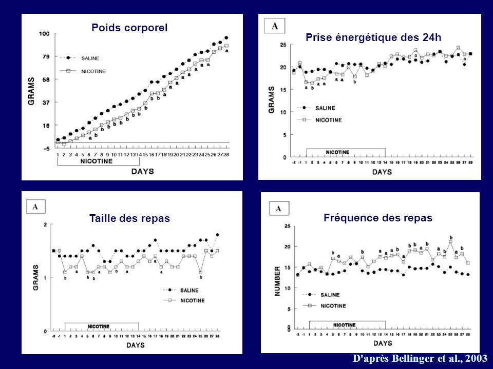 D'après Bellinger et al., 2003 Prise énergétique des 24h Poids corporel Taille des repas Fréquence des repas