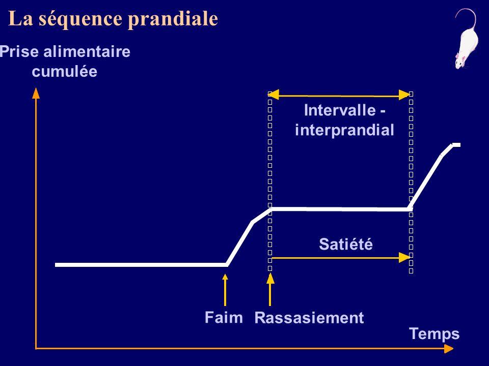 d après Louis-Sylvestre & Le Magnen, NeuroSci Bio Behav, 1981 faim rassasiement 1 g repas 1,10 1,00 0,90 0,80 3 min satiété Glycémie (g/l) Signal de faim : lhypoglycémie préprandiale