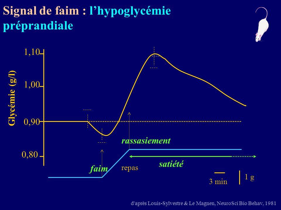 d'après Louis-Sylvestre & Le Magnen, NeuroSci Bio Behav, 1981 faim rassasiement 1 g repas 1,10 1,00 0,90 0,80 3 min satiété Glycémie (g/l) Signal de f
