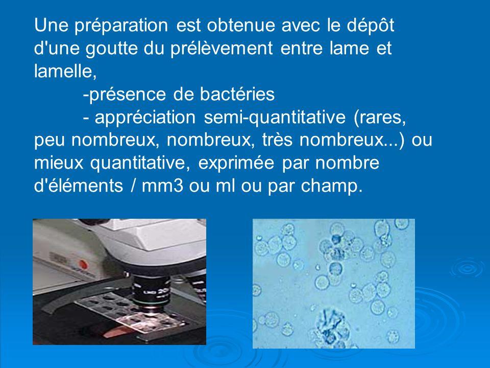 Une préparation est obtenue avec le dépôt d'une goutte du prélèvement entre lame et lamelle, -présence de bactéries - appréciation semi-quantitative (